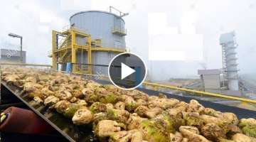Beautiful Modern Technology Factory Sugar Beet Processing Plant Automatic