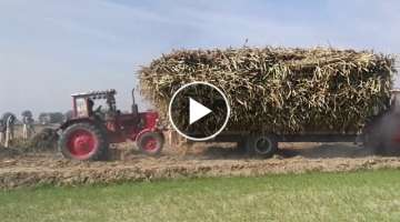 Powerful Tractor stunt | 5 Tractors pull out heavy load sugarcane trolley | Belarus & MF Tractors