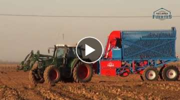 Beetroot Picker